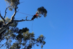 Cabling & Bracing Tree Services